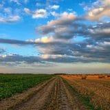 Comment les drones peuvent favoriser l'agriculture de précision et la gestion des cultures ?