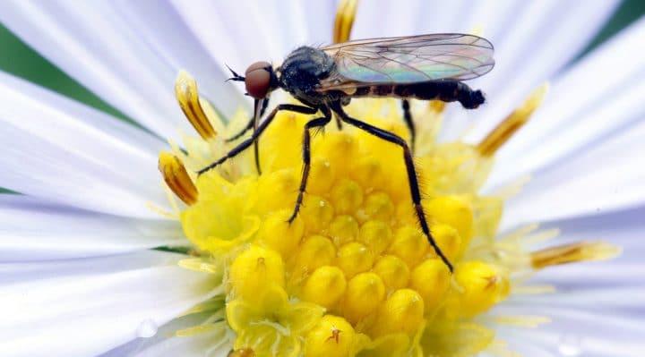 comment se débarrasser des moustiques dans les pots de fleurs